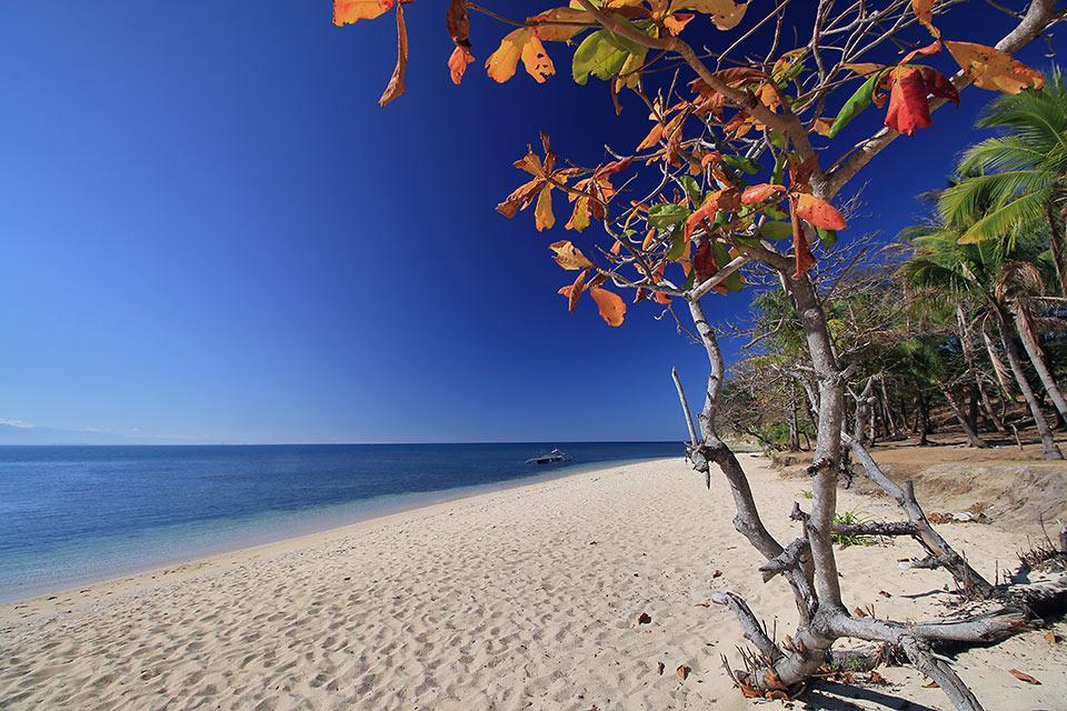 talisay trees on Hermana Menor Island